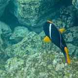 galapagos - Galapagos_FB_2-37.jpg
