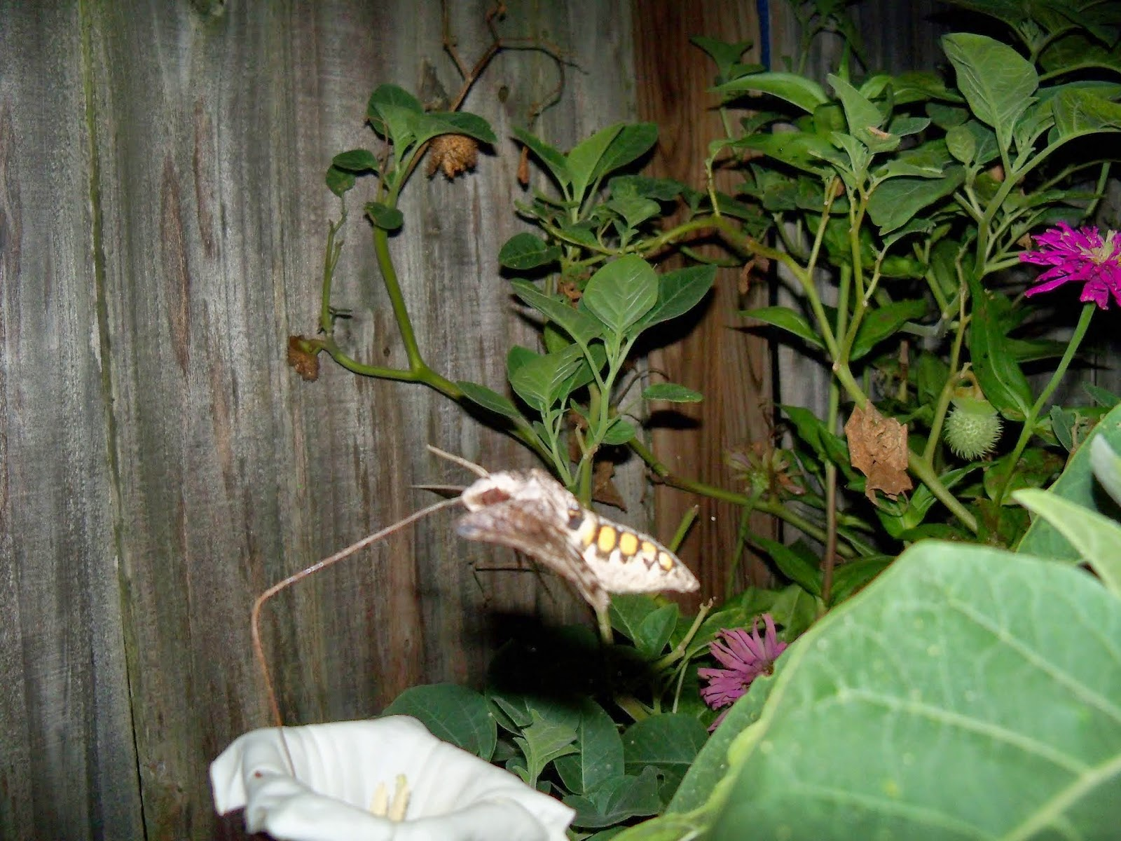 Gardening 2014 - 116_3610.JPG