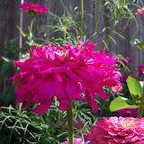 Gardening 2012 - 115_2839.JPG