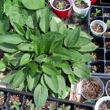 Gardening 2010 - 101_1666.JPG