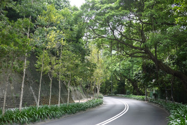 tree lined road in Hong Kong