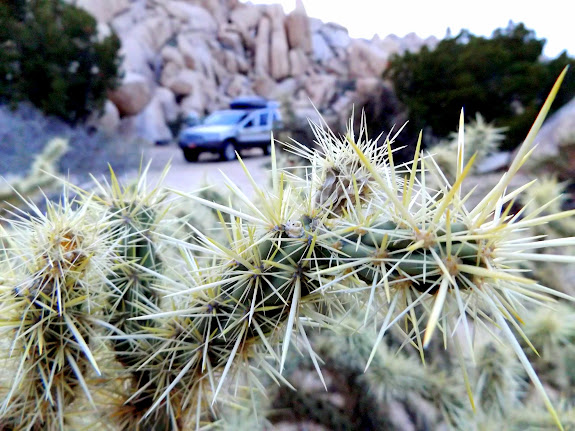 Cholla near camp