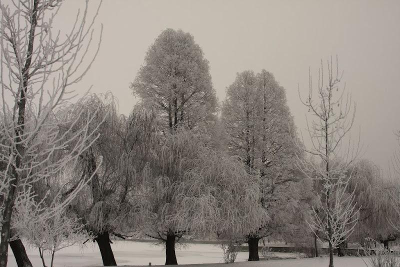 zapada Bucuresti copaci