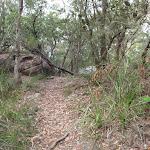 Birrawana Track above Bobbin Head (119704)