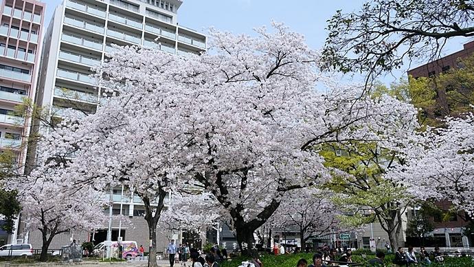 12 大阪賞櫻景點 堀江公園 味處和風亭