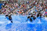 Orcas (© 2014 Isabell Gernert)