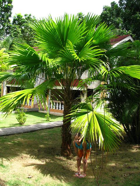 Из зимы в лето. Филиппины 2011 - Страница 3 IMG_0033