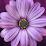 shalini unnithan's profile photo