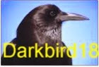 darkbird18.JPG