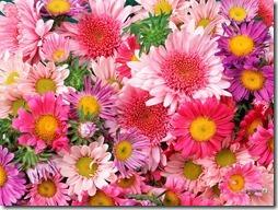 margaritas flores (17)