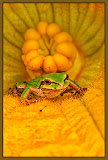 """""""Baby Chorus Frog"""" by Ardythe Wendt"""
