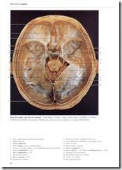 066 Nervos Craniais