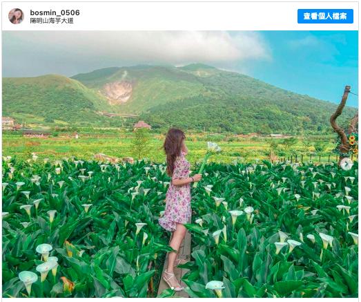 2021陽明山賞花 採海芋 推薦:陽明山海芋大道,包含交通方式、開放時間