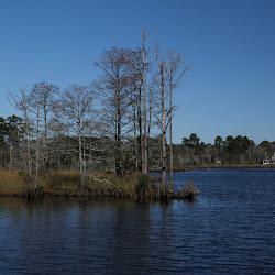 Fowl Marsh from Boat Feb3 2013 095