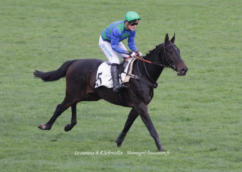 Photos Auteuil 7-11-2015 (48h de l'obstacle) IMG_6655