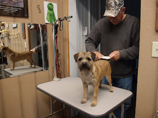 Dan and Indy at the grooming table.