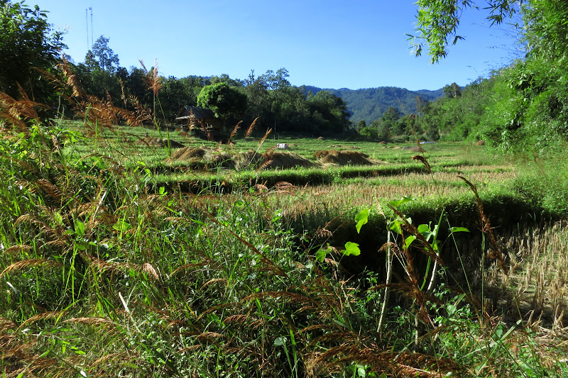 Harvested rice field near Pam Bok waterfall