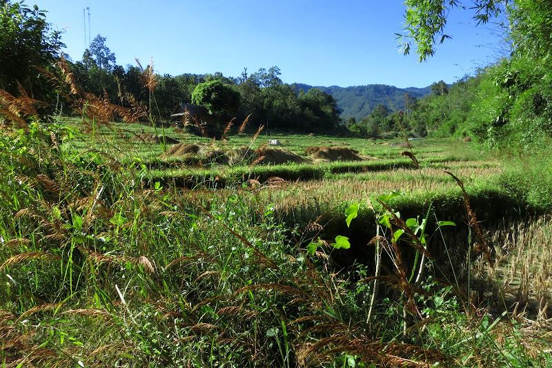 Harvested rice field near Pam Bok waterfall