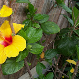 Gardening 2013 - 115_5653.JPG