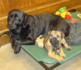 Shiner and Trapper before he left with his new Family.