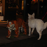 KNON puppys in de stad nov 2008 - DSC09039.JPG