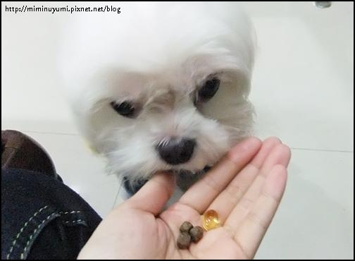 狗狗營養保健品可攪在狗食內讓狗狗食用