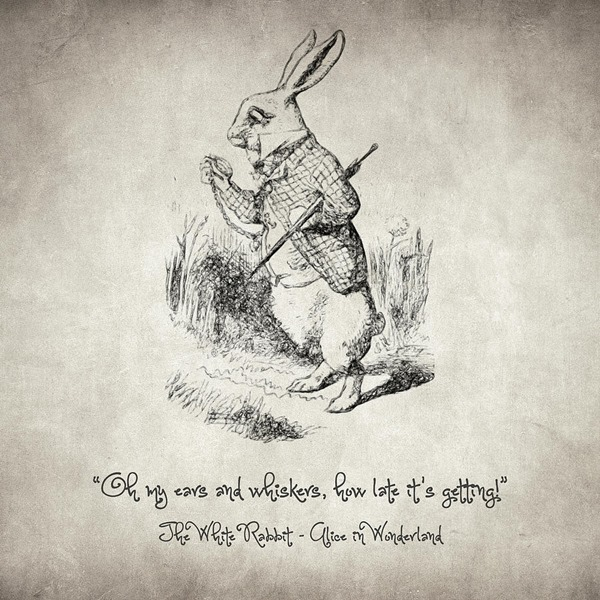 the-white-rabbit-quote-taylan-soyturk
