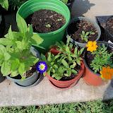 Gardening 2011 - 100_9292.JPG