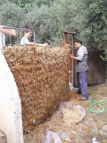 cloison végétale, cloture végétale à la pépinière grangier