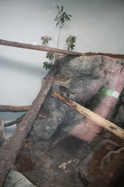 Zoo Snooze 2015 - IMG_7231.JPG