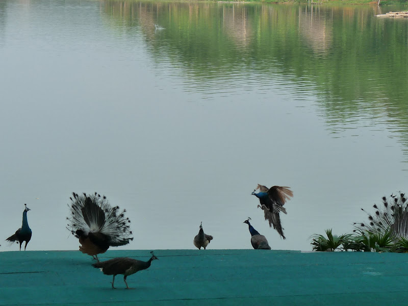 Chine . Yunnan..Galamba, Menglian Album A - Picture%2B316.jpg