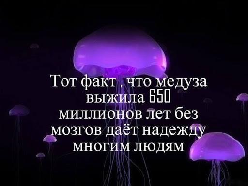 Тот факт, что медузы выжили 650 миллионов лет без мозгов дает надежду мнгогим людям...