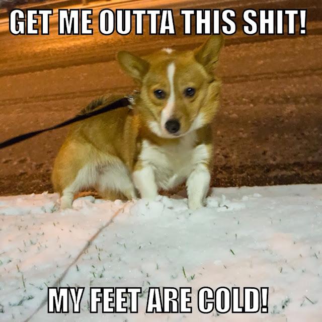 Corgi Meme Snow