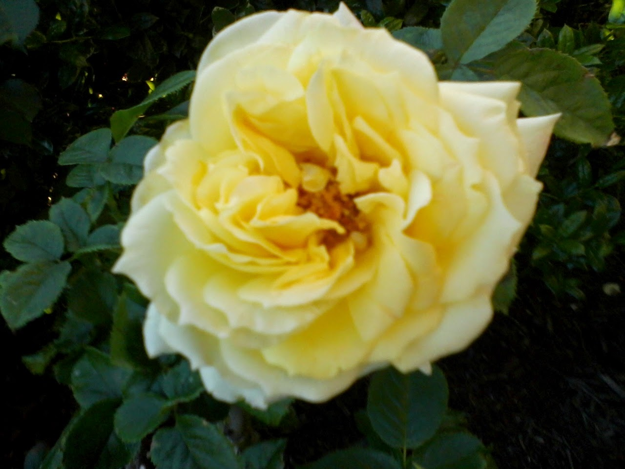 Gardening 2014 - 0409191003.jpg