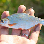 20140718_Fishing_Lysyn_017.jpg