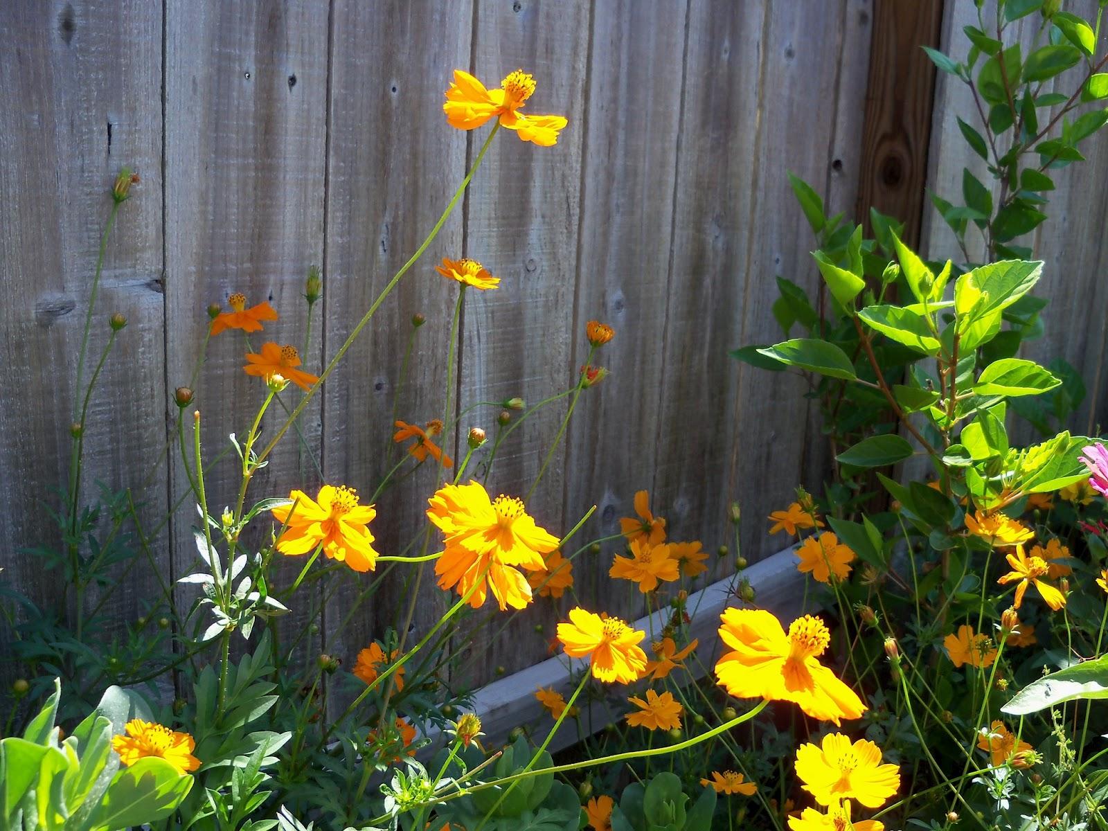 Gardening 2011 - 100_9149.JPG