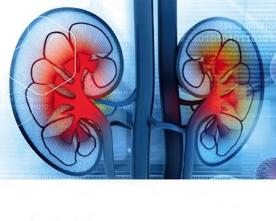 akademie zdraví ledviny