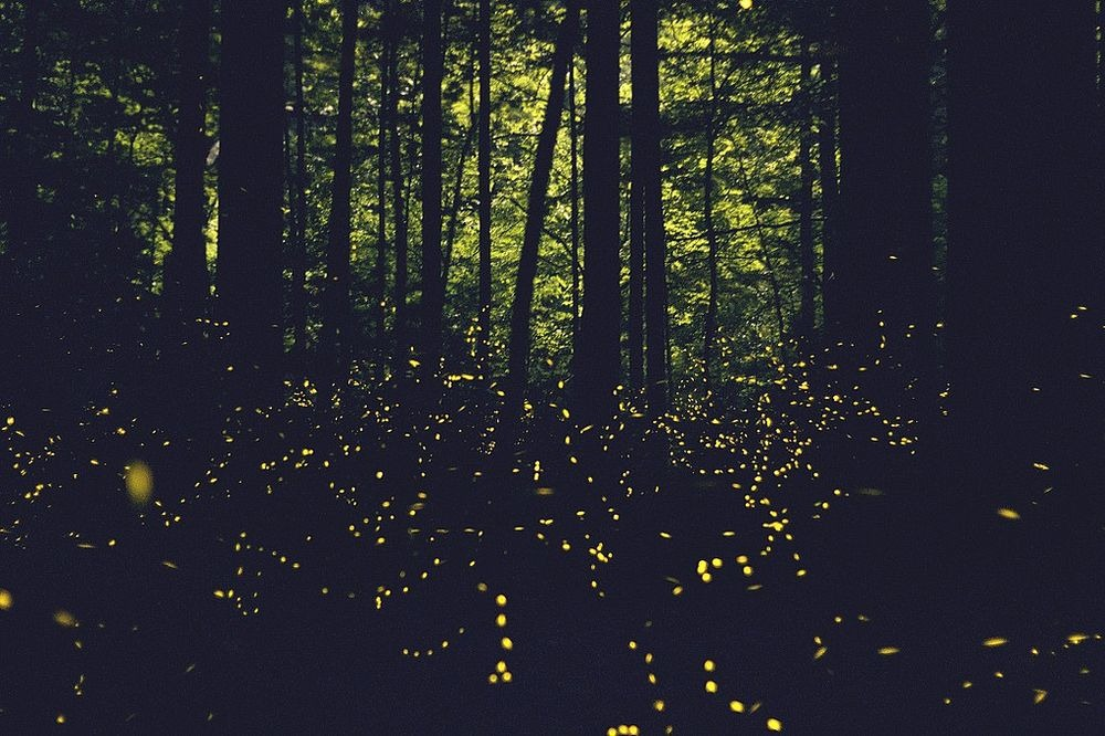 synchronous-fireflies-4