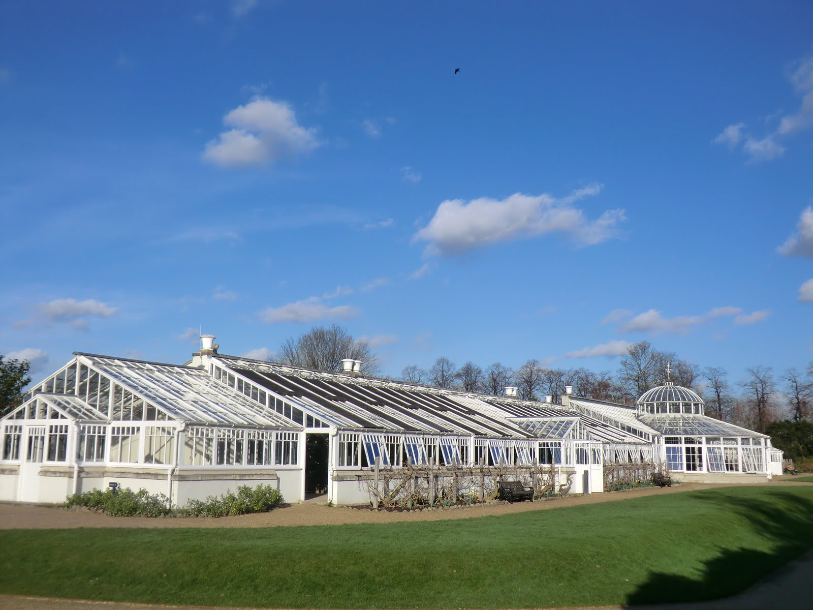 CIMG2512 Conservatory, Chiswick House
