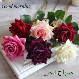Mohamad Yehia avatar