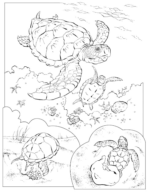 Greenseaturtlecoloringpages On National Geographic