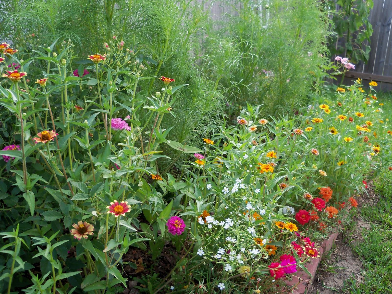 Gardening 2010, Part Three - 101_3706.JPG