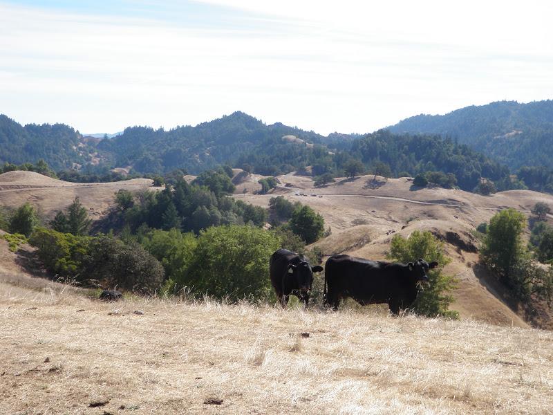 Levi's Gran Fondo • King Ridge