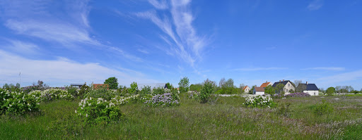 2015-06-05 003_001(Gotland)c.jpg