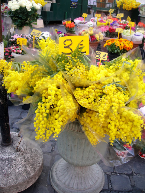mimosa flowers are the symbol of women's day