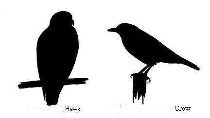 [BRD_IDPosture_hawkcrow+copy+copy%5B4%5D]