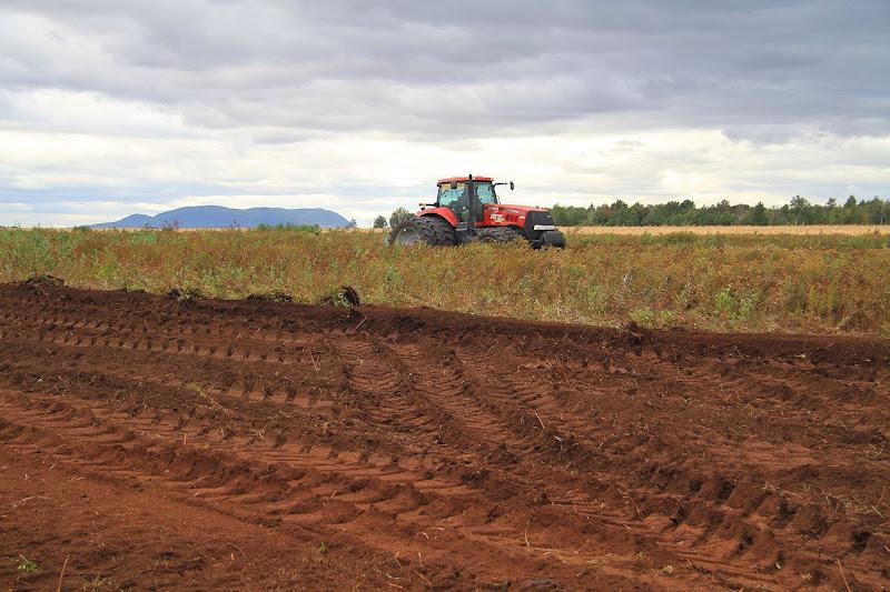 Transformation branchailles en terre agricole - Transformation-de-branchailles-en-terre-agricole-1.jpg
