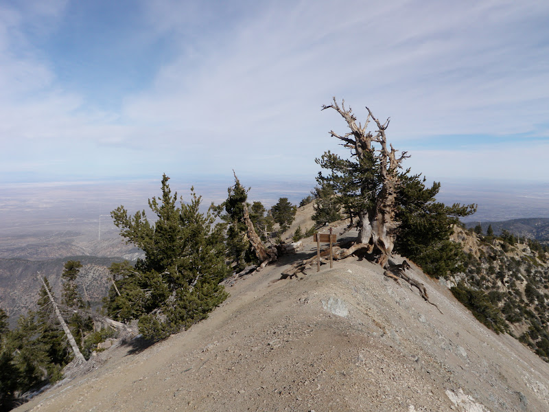 Mount Baden-Powell • Summit Ridge
