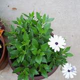 Gardening 2011 - 100_7405.JPG