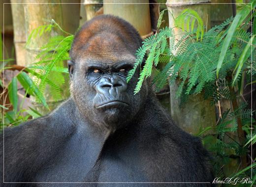 bH wiki aarhus zoo